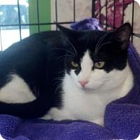 Adopt A Pet :: Alexander 06-3989 - Fremont, CA