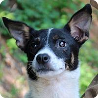 Adopt A Pet :: Ethel - Locust Fork, AL