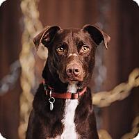 Adopt A Pet :: Liora - Portland, OR