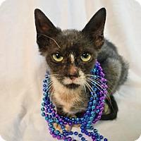 Adopt A Pet :: Clarence - Austin, TX