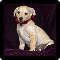 Adopt A Pet :: Marty - San Diego, CA