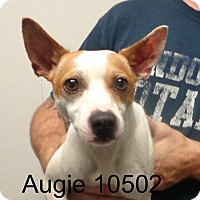 Adopt A Pet :: Augie - baltimore, MD