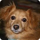 Adopt A Pet :: Gaven