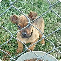 Adopt A Pet :: Bandi - Sussex, NJ