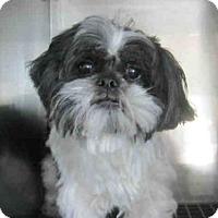 Adopt A Pet :: A368732 - San Antonio, TX