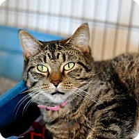 Adopt A Pet :: Apple - Hanna City, IL