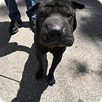 Adopt A Pet :: Jett - Mira Loma, CA