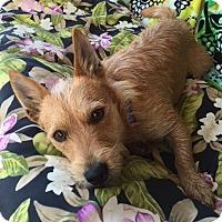 Adopt A Pet :: Ronald - Huntsville, AL