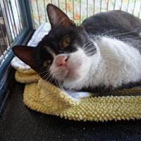 Adopt A Pet :: Neenci - Montello, WI