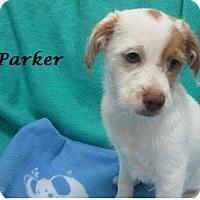 Adopt A Pet :: Parker - Bartonsville, PA