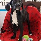 Adopt A Pet :: Marlie