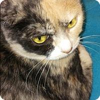 Adopt A Pet :: Macie - San Ramon, CA