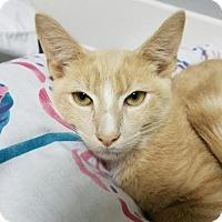 Adopt A Pet :: Frank     161575 - Atlanta, GA