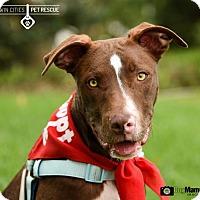 Adopt A Pet :: Dallas - St Paul, MN