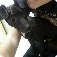 Adopt A Pet :: Blade! *Adoption Pending!* - New York, NY