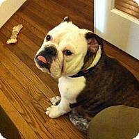 Adopt A Pet :: Joanna - Mechanicsburg, PA