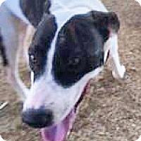 Adopt A Pet :: Oreo - Spokane, WA