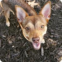 Adopt A Pet :: Audrey - Cedar Creek, TX