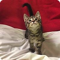 Adopt A Pet :: Addison - Ringwood, IL