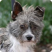 Adopt A Pet :: Albert - Carlsbad, CA