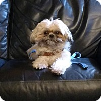 Adopt A Pet :: CRUZ-pending - Eden Prairie, MN