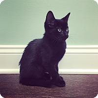 Adopt A Pet :: Kato Christmas - Highland Park, NJ