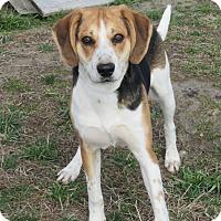 Adopt A Pet :: Shiloh - Elizabeth City, NC