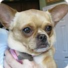 Adopt A Pet :: Winifred