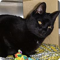 Adopt A Pet :: Coleman - Buhl, ID