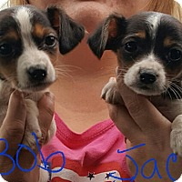 Adopt A Pet :: Bob & Jack - Sussex, NJ