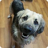 Adopt A Pet :: Ralph - Lisbon, OH