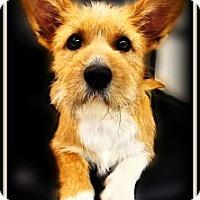 Adopt A Pet :: Macie - Pascagoula, MS