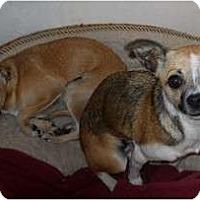 Adopt A Pet :: Bitsy & Itsy - dewey, AZ