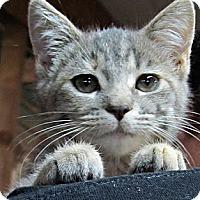 Adopt A Pet :: Gidget - Seminole, FL