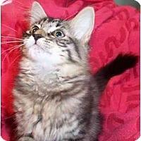 Adopt A Pet :: Danielle - Colmar, PA