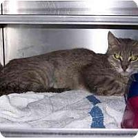 Adopt A Pet :: Emily - Syracuse, NY