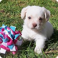 Adopt A Pet :: Jackson - La Habra Heights, CA