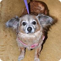 Adopt A Pet :: Bonnie - Gainesville, FL