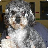 Adopt A Pet :: Tyler - Lockhart, TX