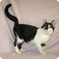 Adopt A Pet :: Lewis - Powell, OH