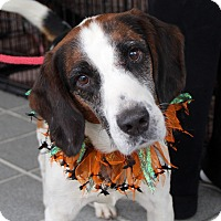 Adopt A Pet :: Sayler - Richmond, VA