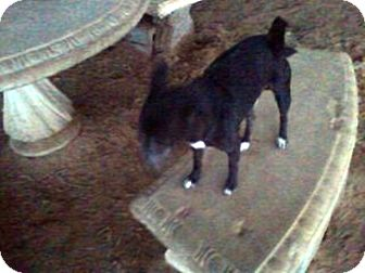 Chihuahua Mix Dog for adoption in Graceville, Florida - Tiny #3