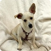 Adopt A Pet :: Cody - Miami, FL