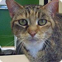 Adopt A Pet :: Gretel - Georgetown, TX