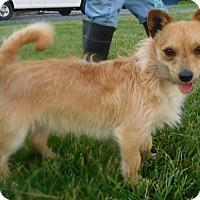 Adopt A Pet :: Willie Nelson - Rockville, MD