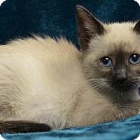 Adopt A Pet :: Linka 160417 - Atlanta, GA