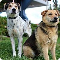 Adopt A Pet :: Sparky & Rofio - San Diego, CA