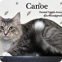 Adopt A Pet :: Canoe - Ortonville, MI