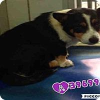 Adopt A Pet :: CAMI - San Antonio, TX