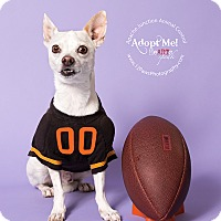 Adopt A Pet :: Pepi - Apache Junction, AZ